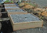 Raisedbeds_inplace-small_edited-1
